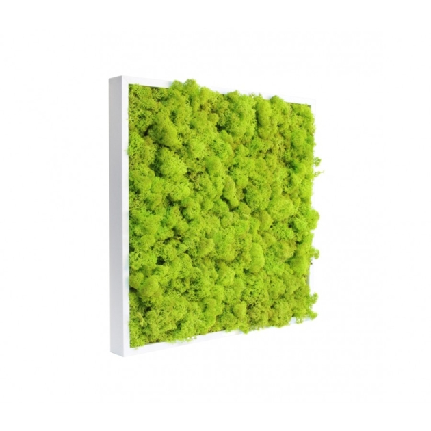 tableau-de-lichen-stabilise-vert-citron-40