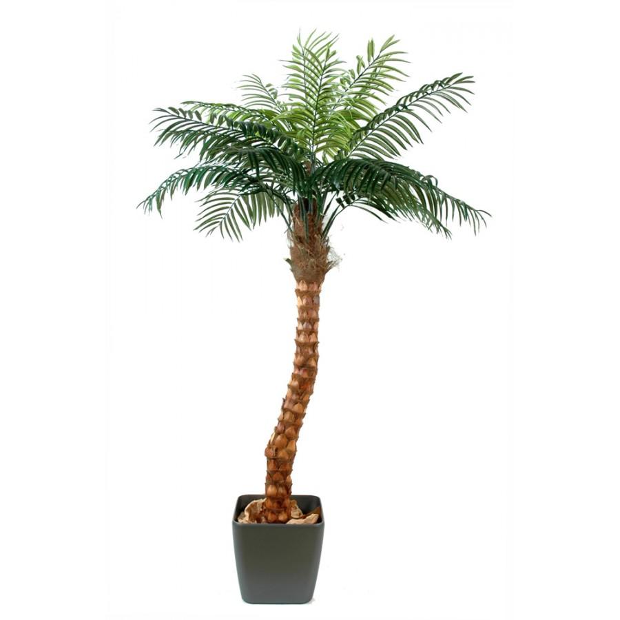palmier-bureaux