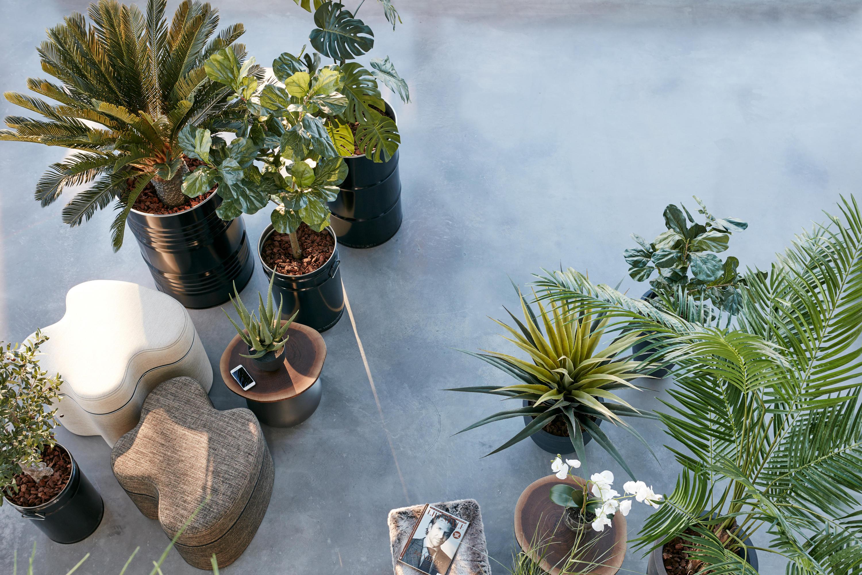 plante interieur sans eau stunning plante interieur sans eau with plante interieur sans eau et. Black Bedroom Furniture Sets. Home Design Ideas