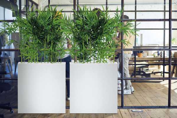 plante de bureau sans entretien laquelle choisir en entreprise. Black Bedroom Furniture Sets. Home Design Ideas